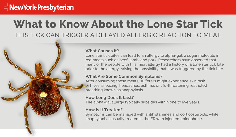 Infographic outlining what to know about the Lone Star Tick