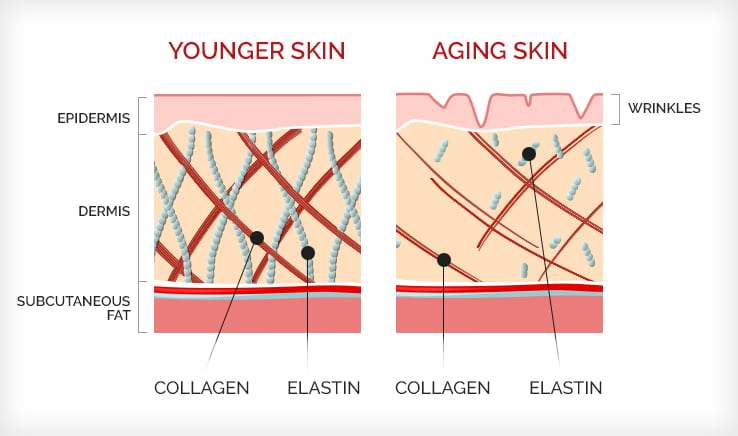 Infographic showing the differences between younger skin and older skin